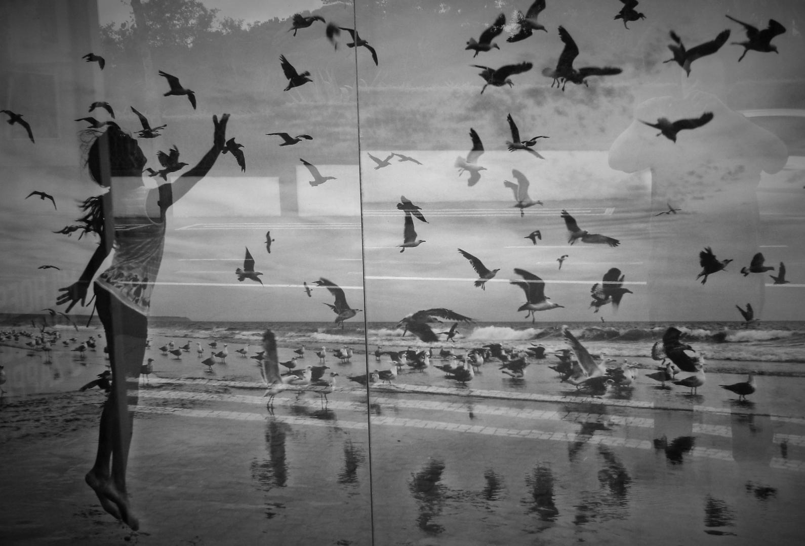 Fotografia de Rua/A minha alma de Gaivota