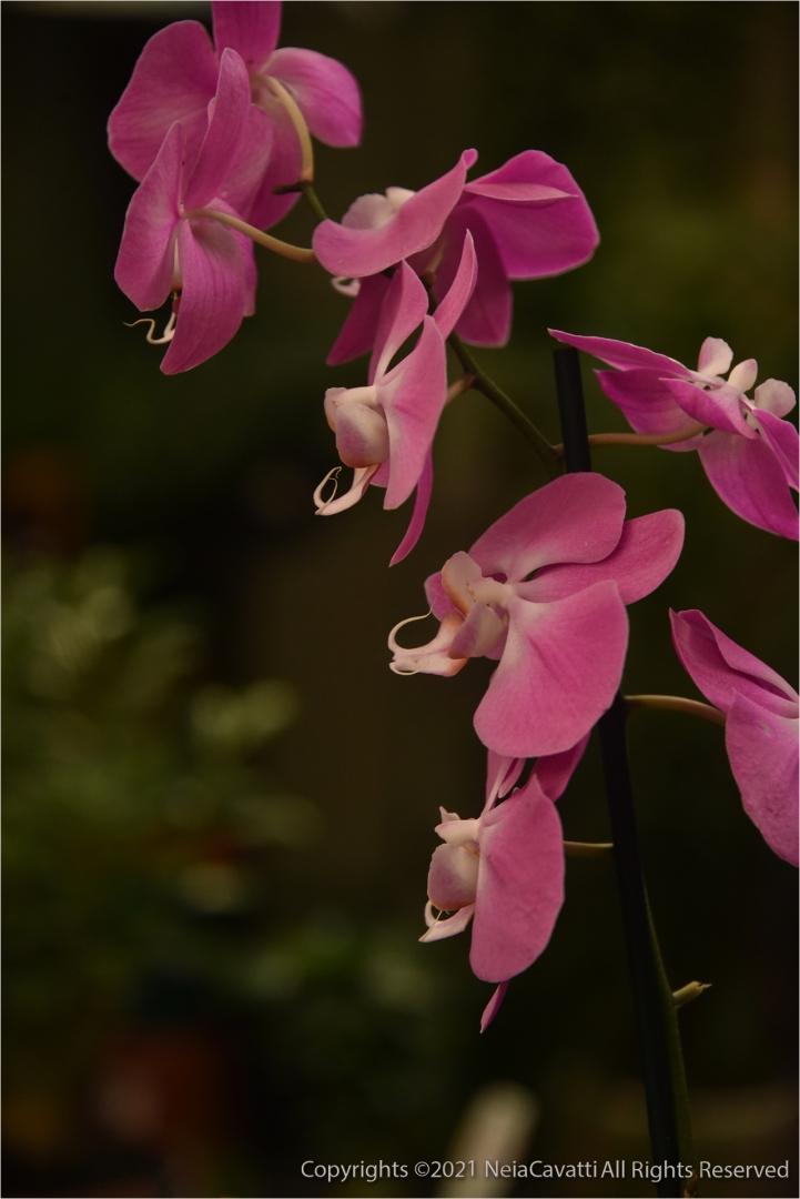 Macro/Ainda Orquídea...detalhes