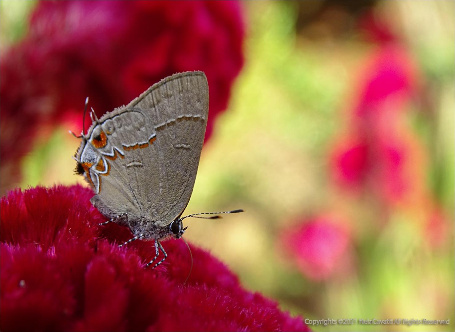 Macro/A borboleta e a flor...(ler)
