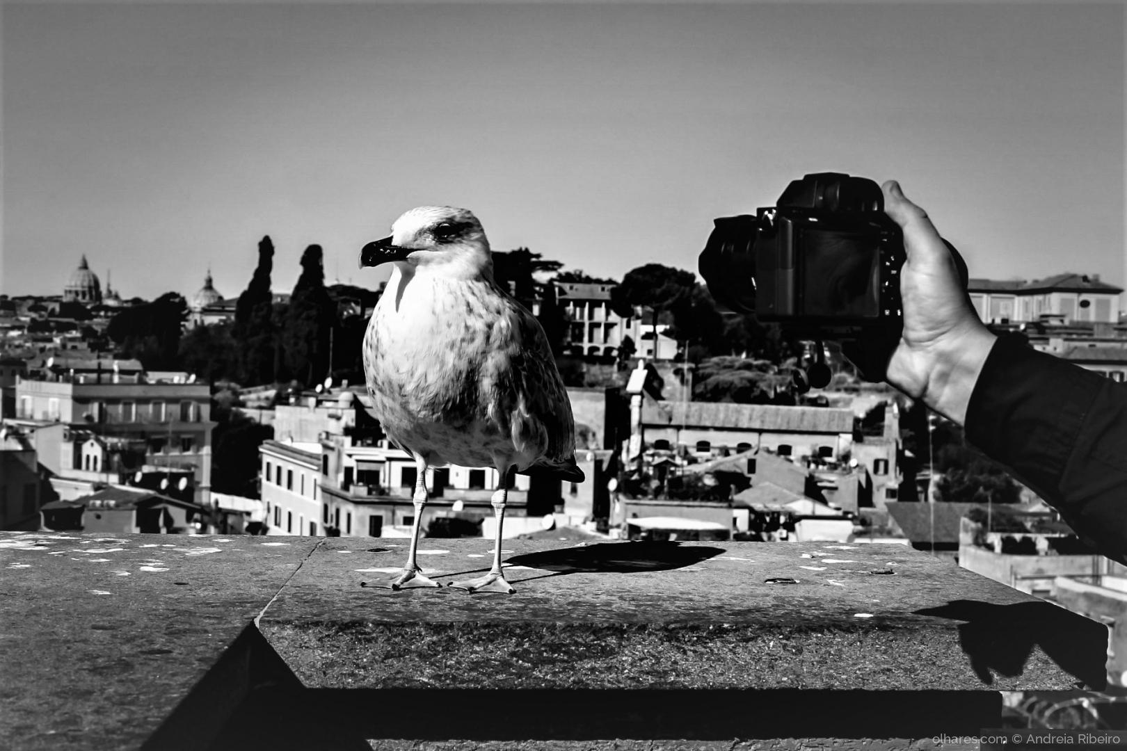 Outros/reino animal VS antiguidades romanas