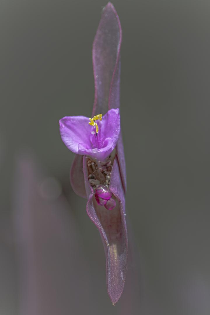 Macro/FLOWER IN VERTICAL