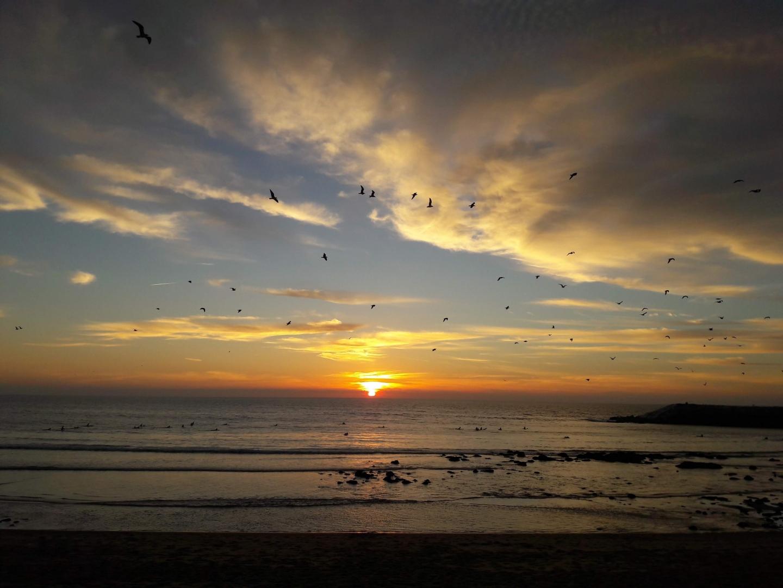 Paisagem Natural/As gaivotas também se vão