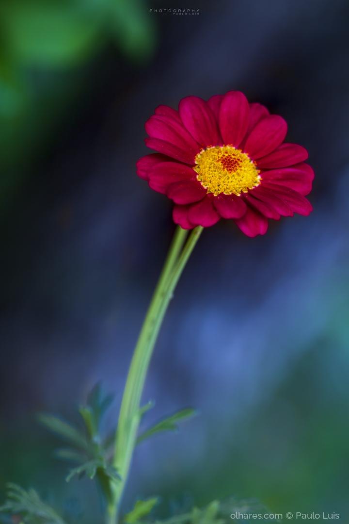 Macro/A flor em destaque