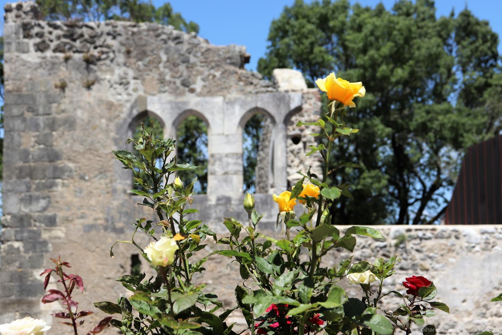 Arquitetura/Rosa efémera no castelo