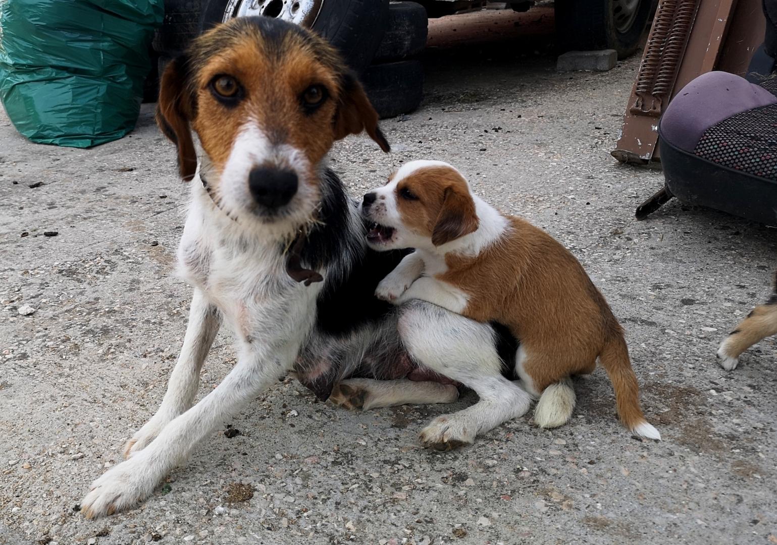 Animais/Amor de Mãe