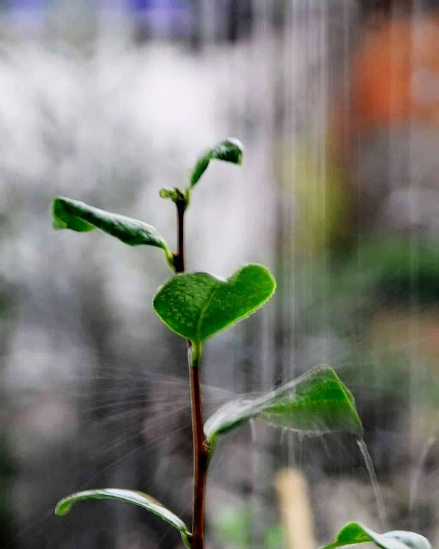 Abstrato/A chuva