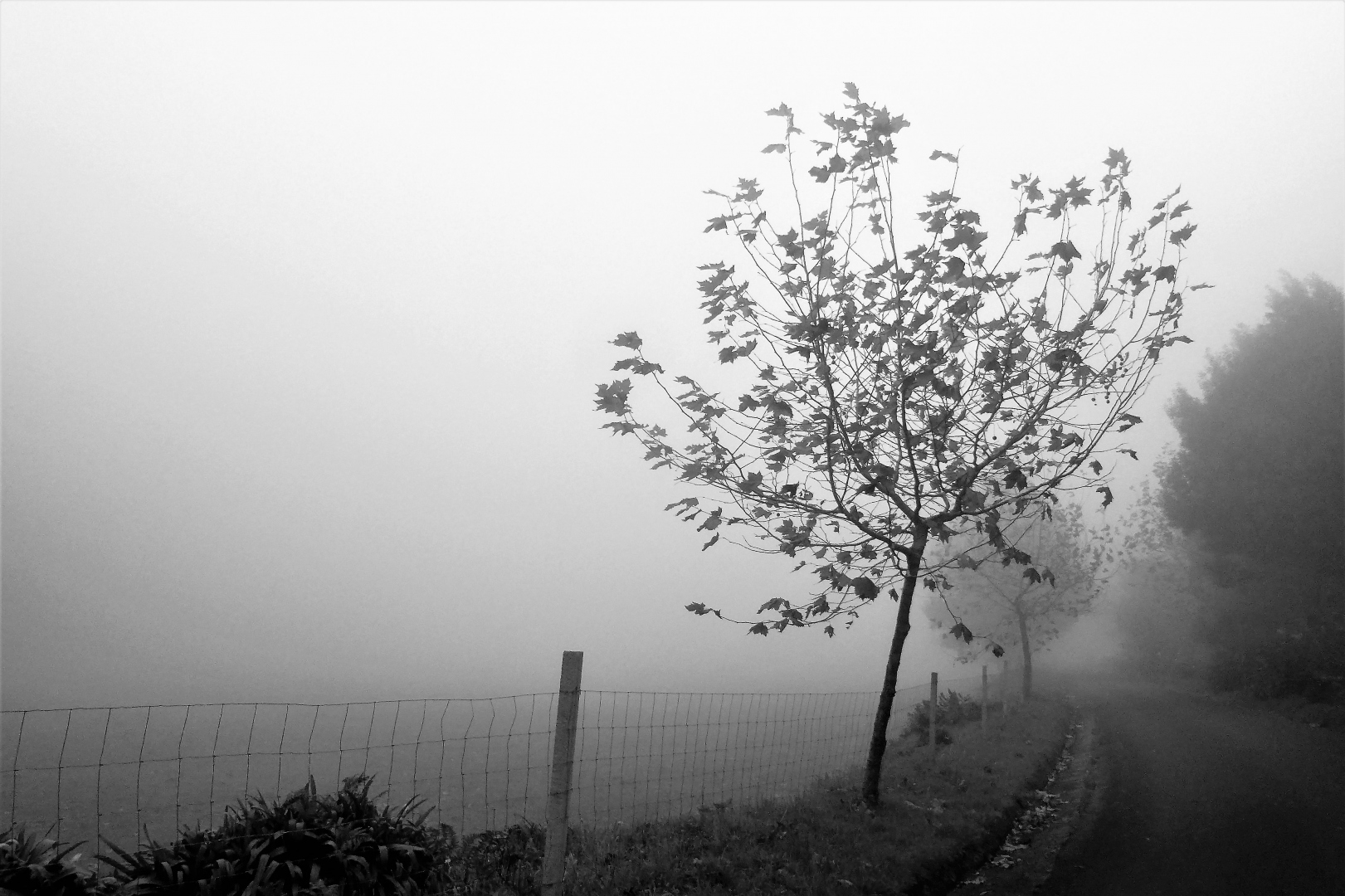 Paisagem Natural/O caminho da Luz da Esperança (II)