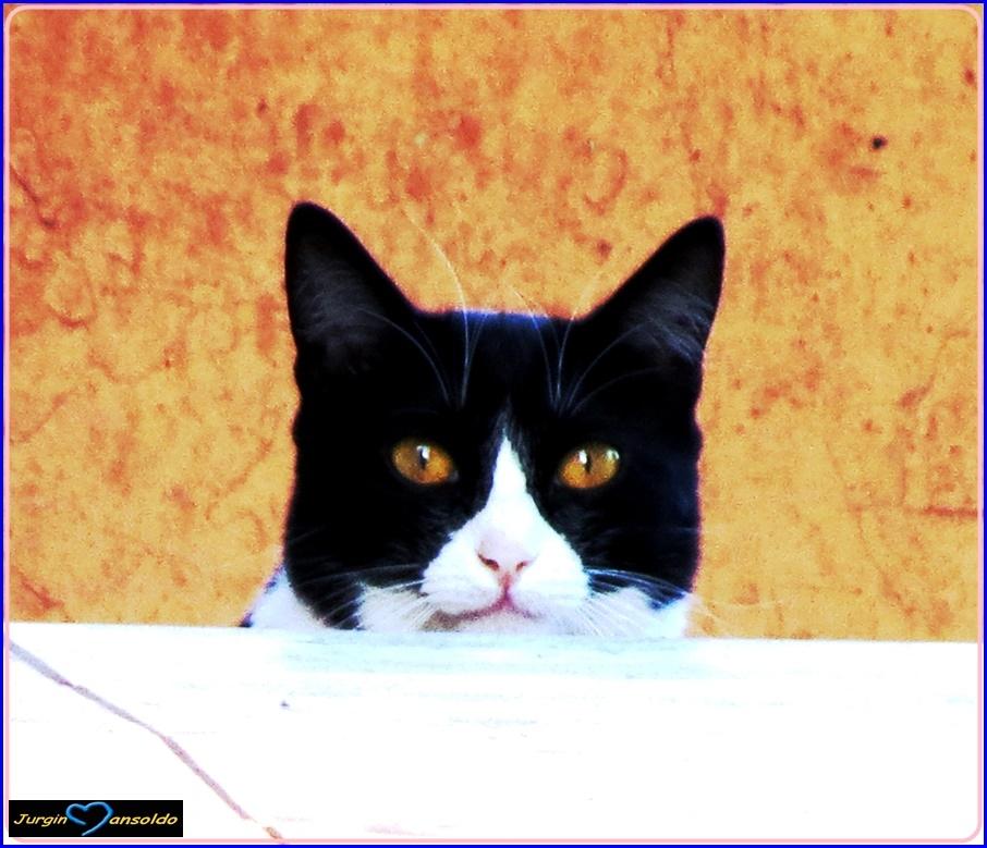 Retratos/Olho do Gato