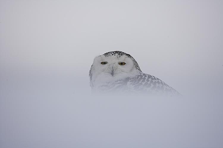 Animais/Aves da Floresta VII