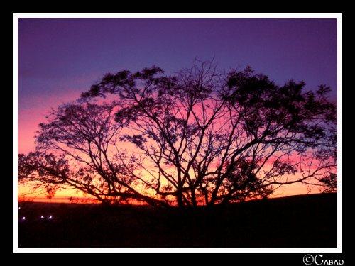 Paisagem Natural/Sunrise Tree @ Solaris festival