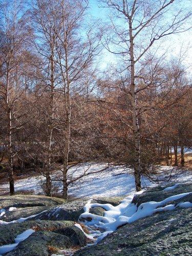 Paisagem Natural/A chegada da Neve
