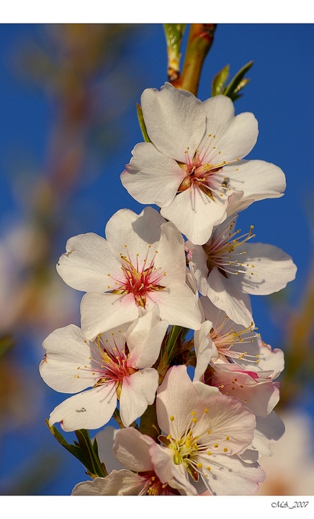 Paisagem Natural/Flôr da Amendoeira