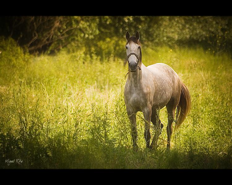Animais/A horse with no name...