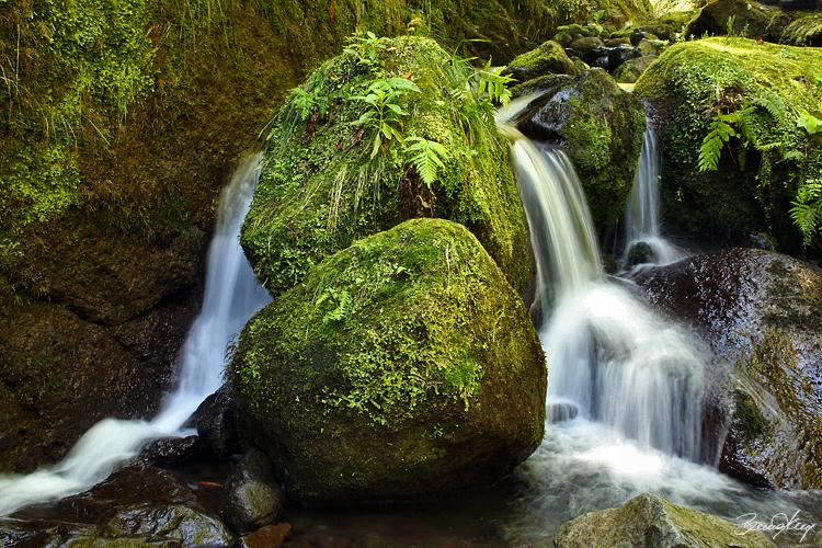 Paisagem Natural/...green place...