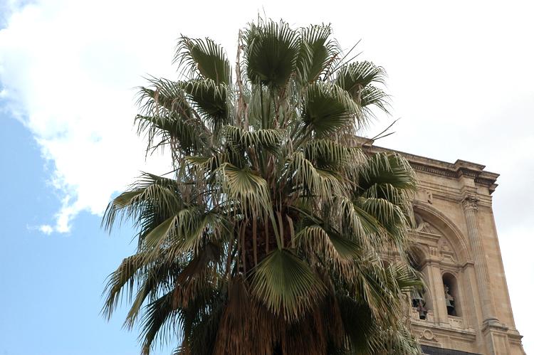 Outros/Por detras da palmeira...