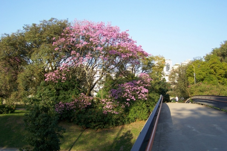 Paisagem Urbana/Caminhos floridos...
