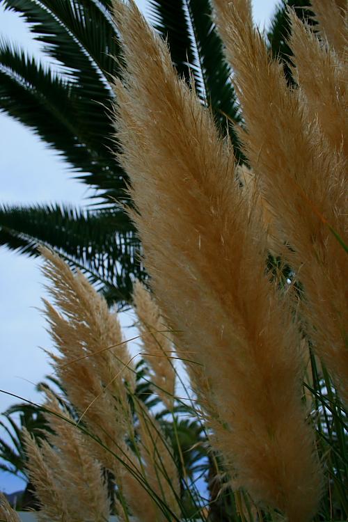 Paisagem Natural/Plumas de ouro
