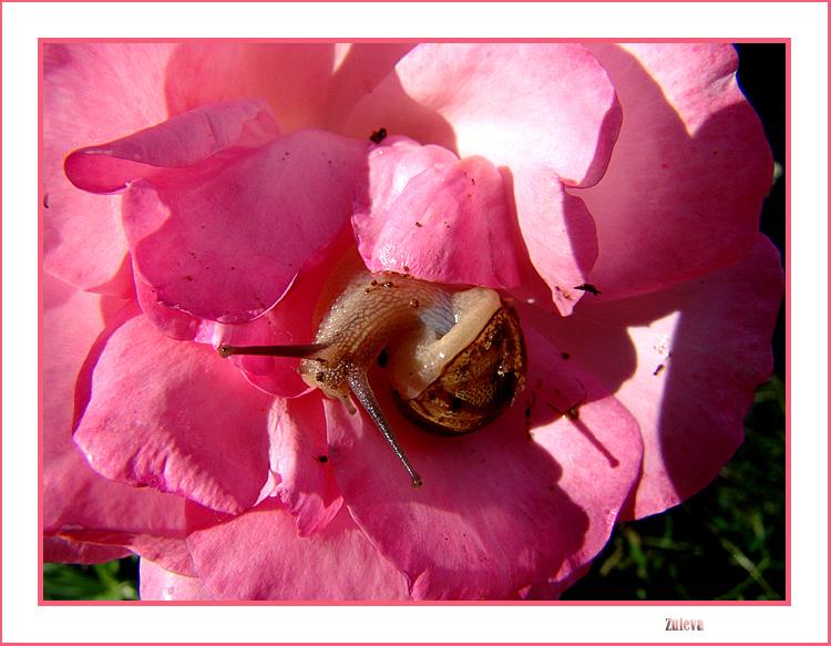 Outros/Também gosto de rosas