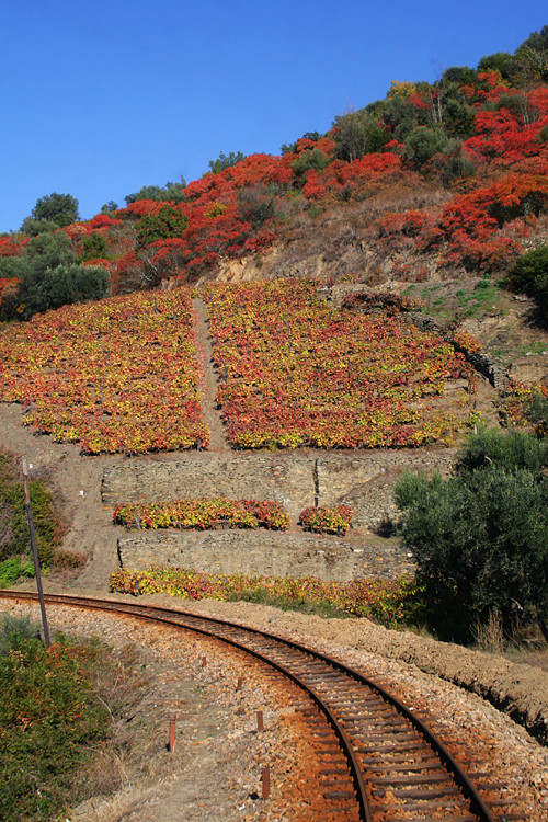 Paisagem Natural/Cores de Outono #2