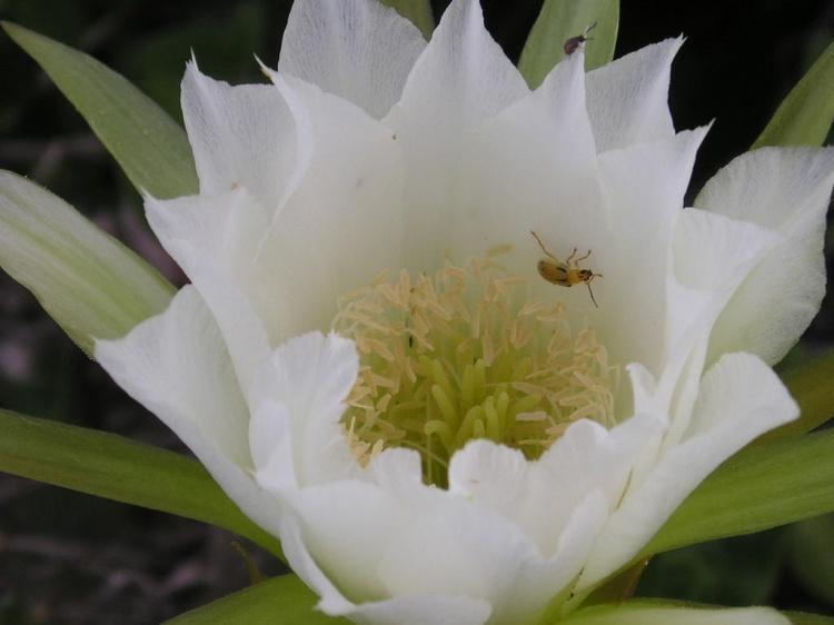 Macro/Flor de Caquito