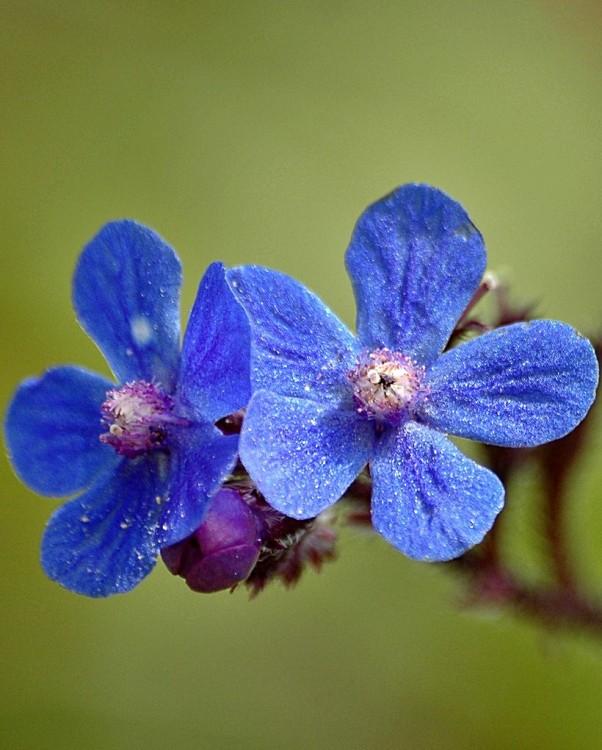 Macro/azul...
