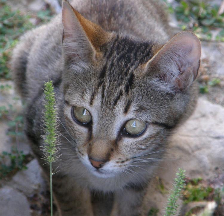 Animais/Bonito Gatinho