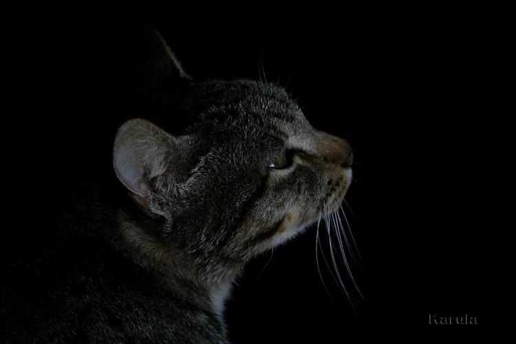 Animais/Tristezas de um felino