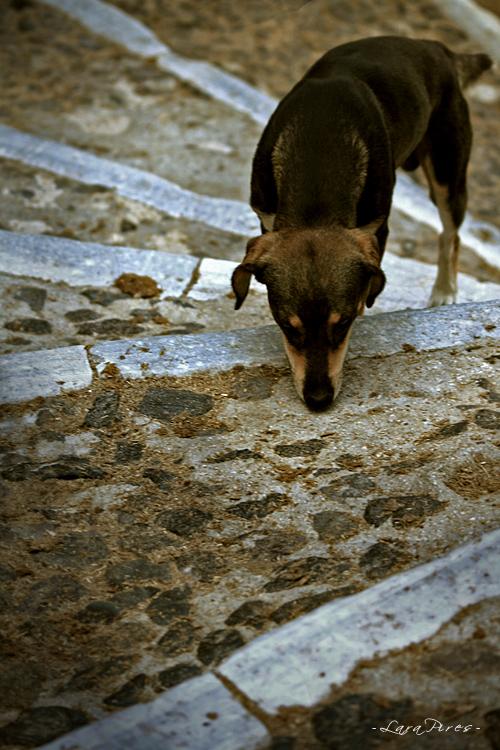 Animais/Hoje segui-te até casa