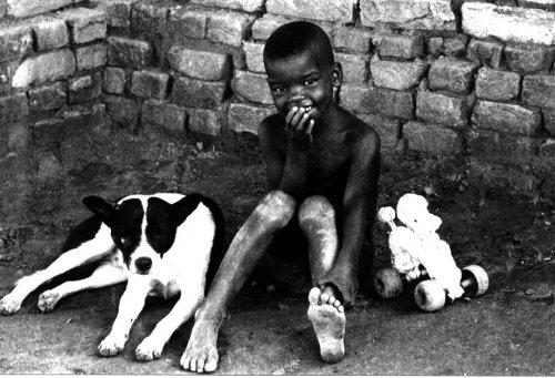 Retratos/Vida de Cão.