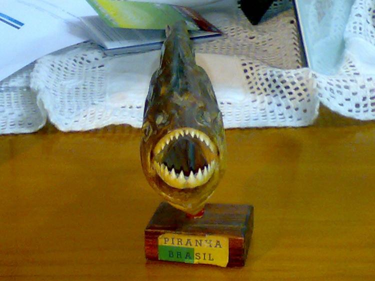 Outros/Um peixe Carnivoro e Perigoso. MUITO CUIDADO!!