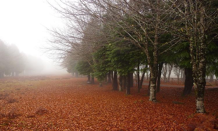Paisagem Natural/Encantos na neblina