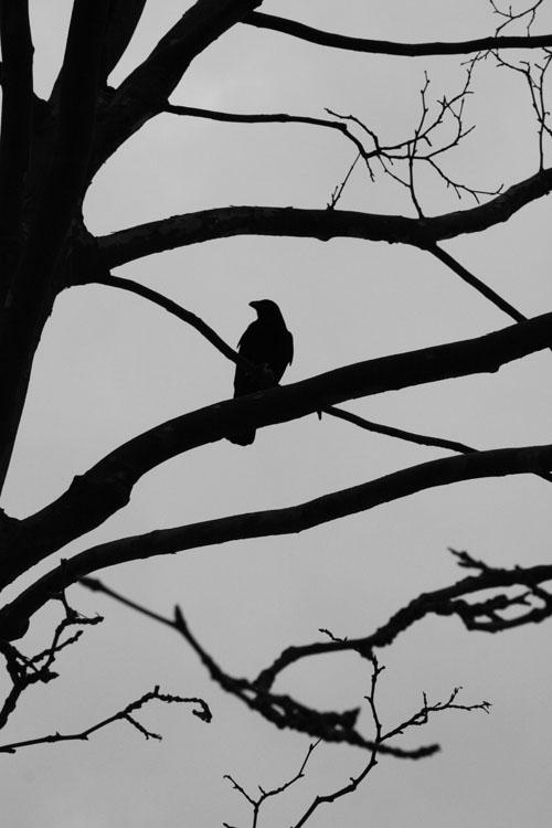 Outros/O corvo