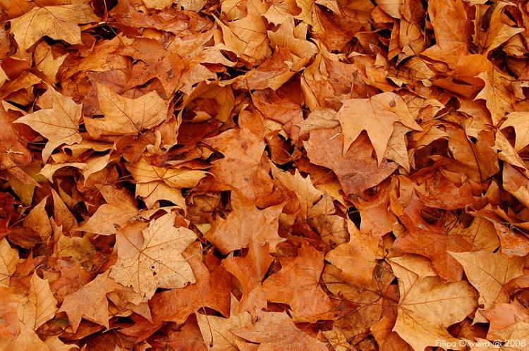 Paisagem Natural/Cores de Outono -  folhas de Inverno