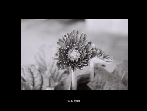 Macro/uma flor...