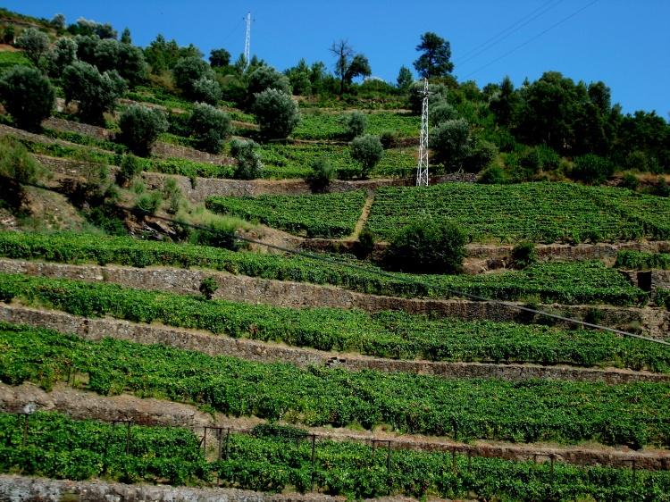 Paisagem Natural/As encostas do Douro