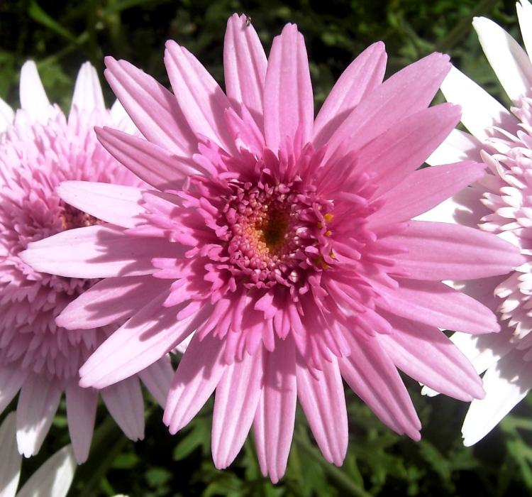 Outros/cor-de-rosa :)