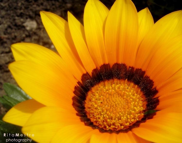 Outros/amarelo :)