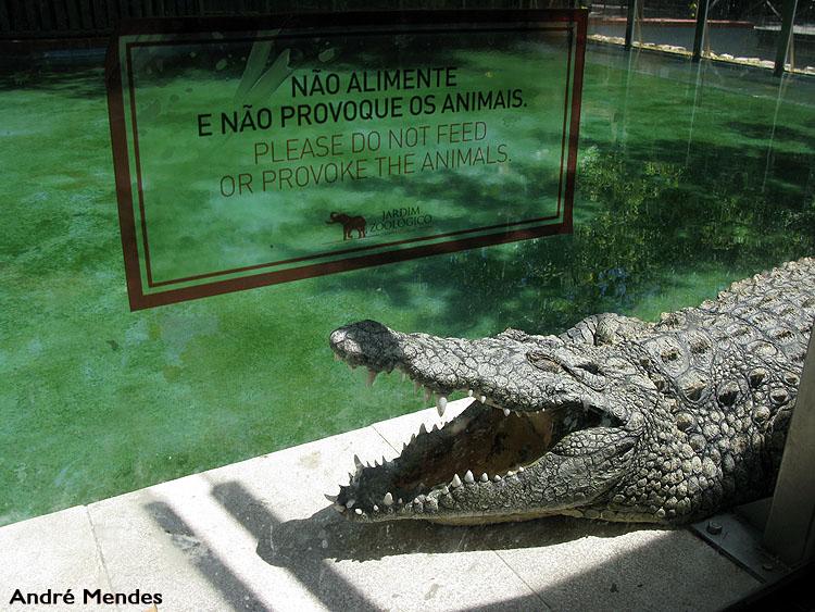 Animais/Não ligues ao aviso...
