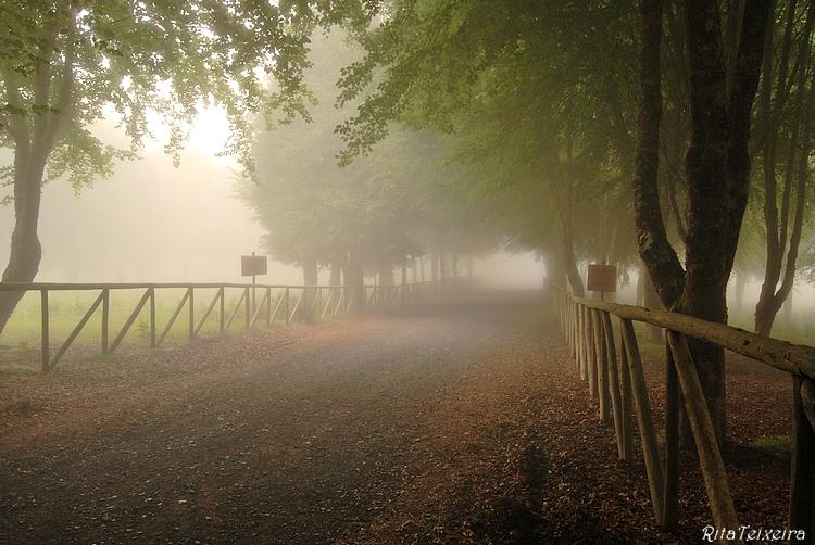 Paisagem Natural/Bosque encantado