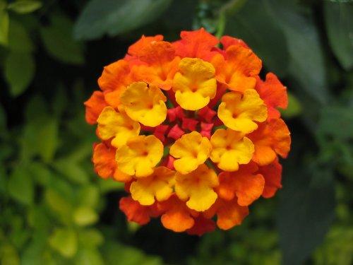 Outros/Cores e Flores !