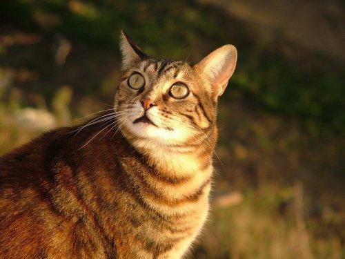 Animais/Olhos cor de mel...