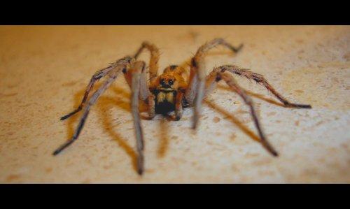 Animais/Aragog - A aranha do Hagrid