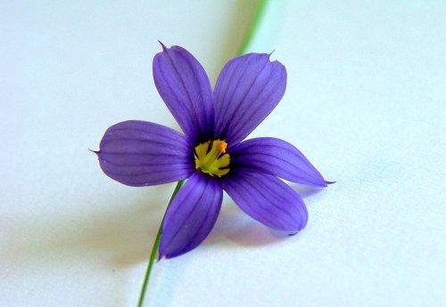 Macro/Flor - T/E #02