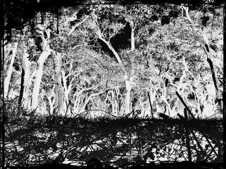 Paisagem Natural/Floresta Perdida
