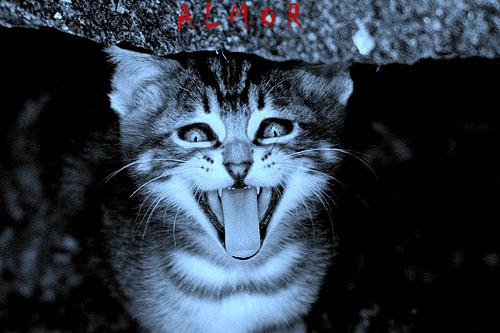 Animais/Vi, Ao luar, Um gato que ri... E me tenta assustar
