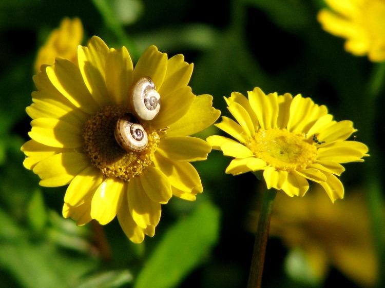 Paisagem Natural/floracóis