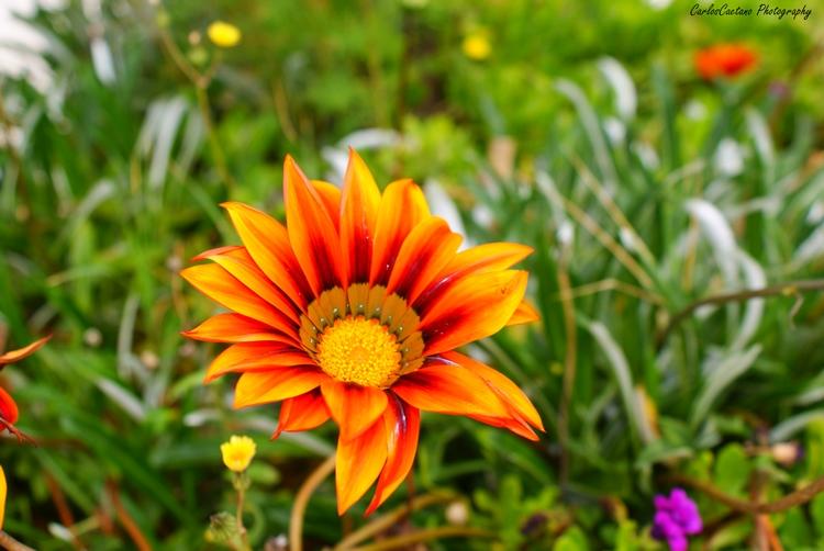 Paisagem Natural/Verão (flower #3)