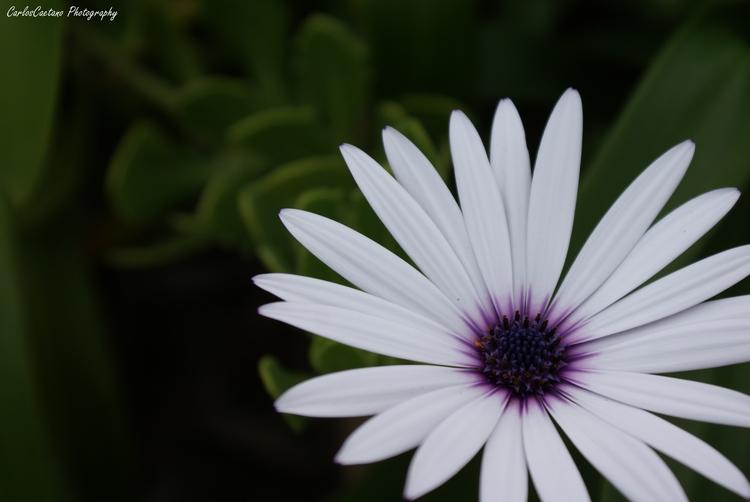 Macro/Flower #4