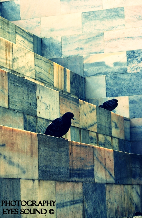 Outros/Serie - Urban Signs - Pigeons flat