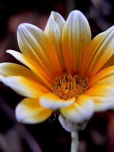 Flores de Outono IV Foto de Paulo Medeiros Olhares ...